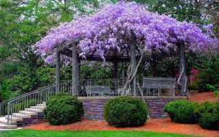 Вьющиеся растения для беседки: названия, фото, варианты озеленения