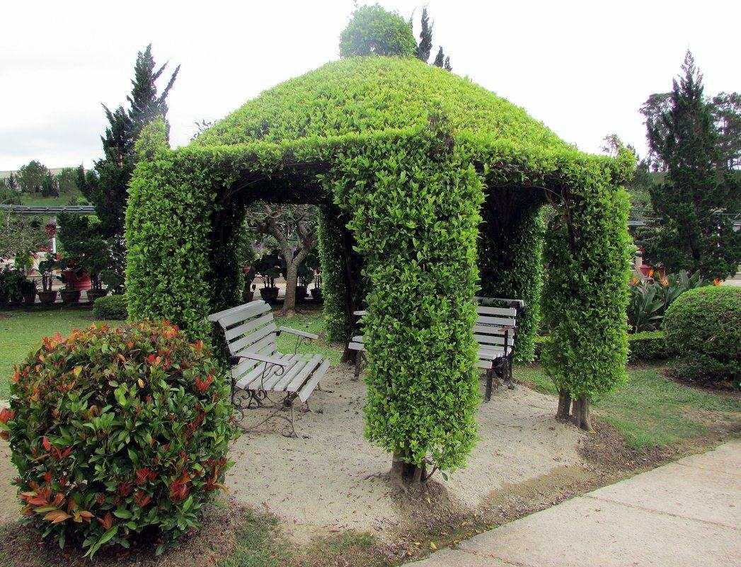 Зона отдыха, увитая зелеными растениями