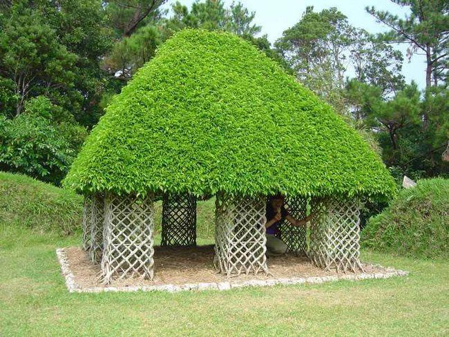 Крыша из растений