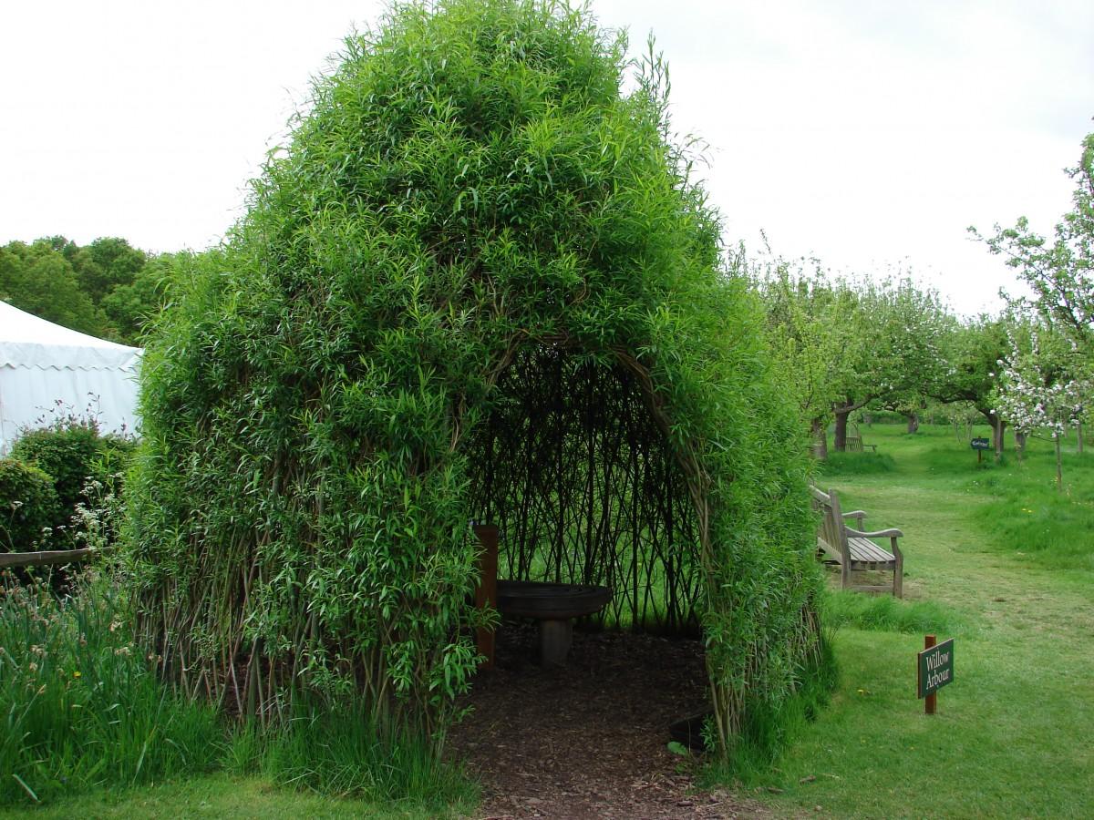 Беседка из зелёных деревьев